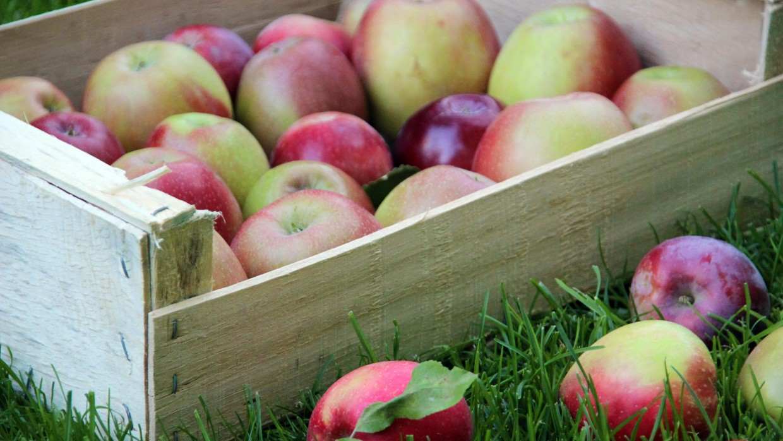 What's Fresh? Apples!