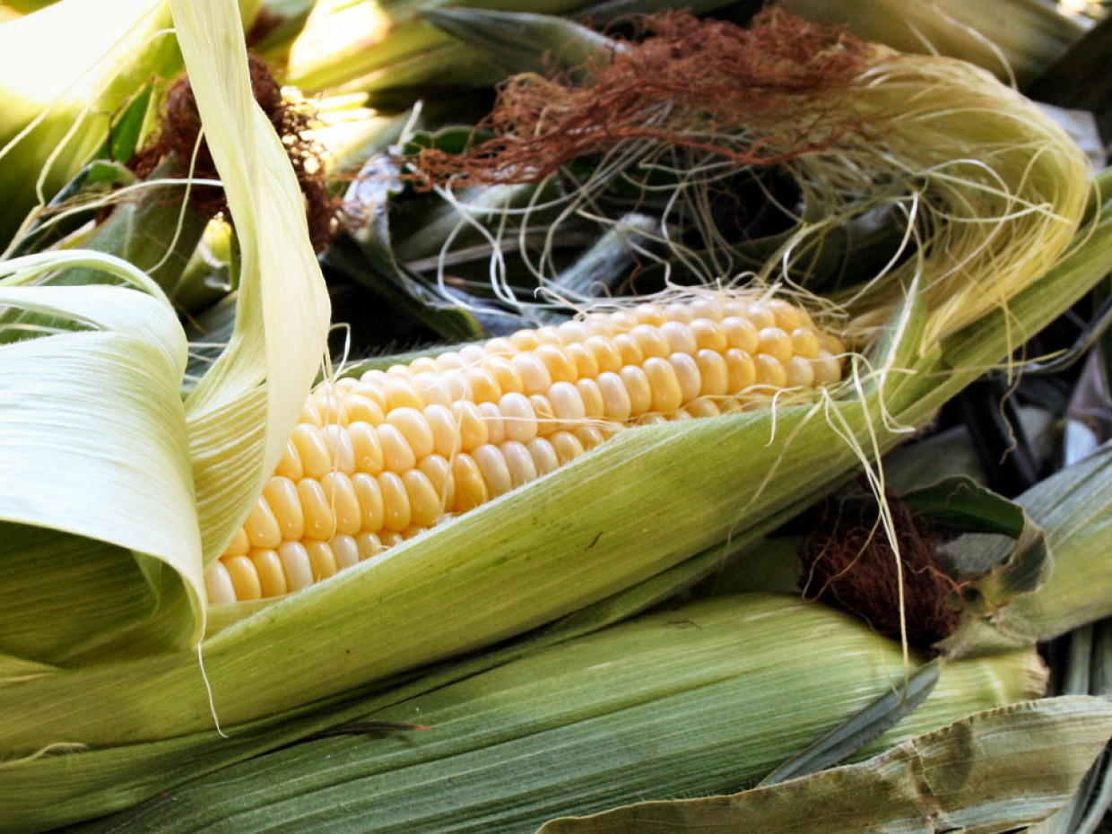What's Fresh? Sweet Corn!