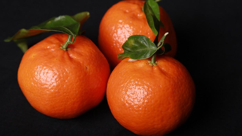 What's Fresh? Citrus!