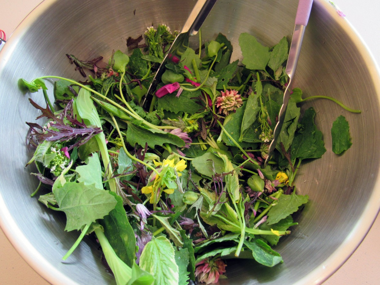 Wild Foods Cookery: Foraged Salads
