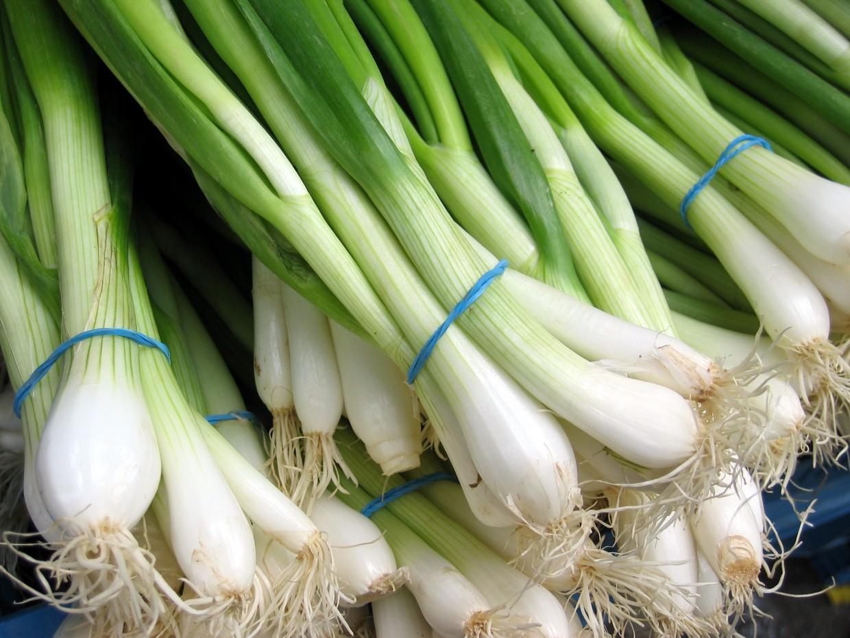Waterman Onions 024-min - Waterman Onions