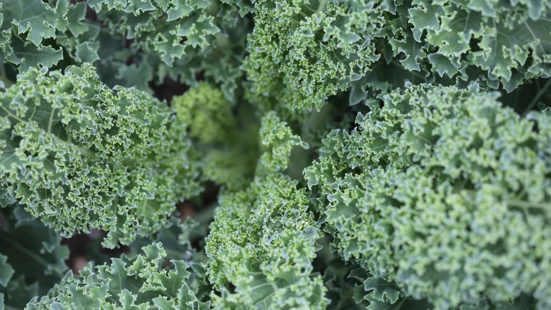What's Fresh? Kale!