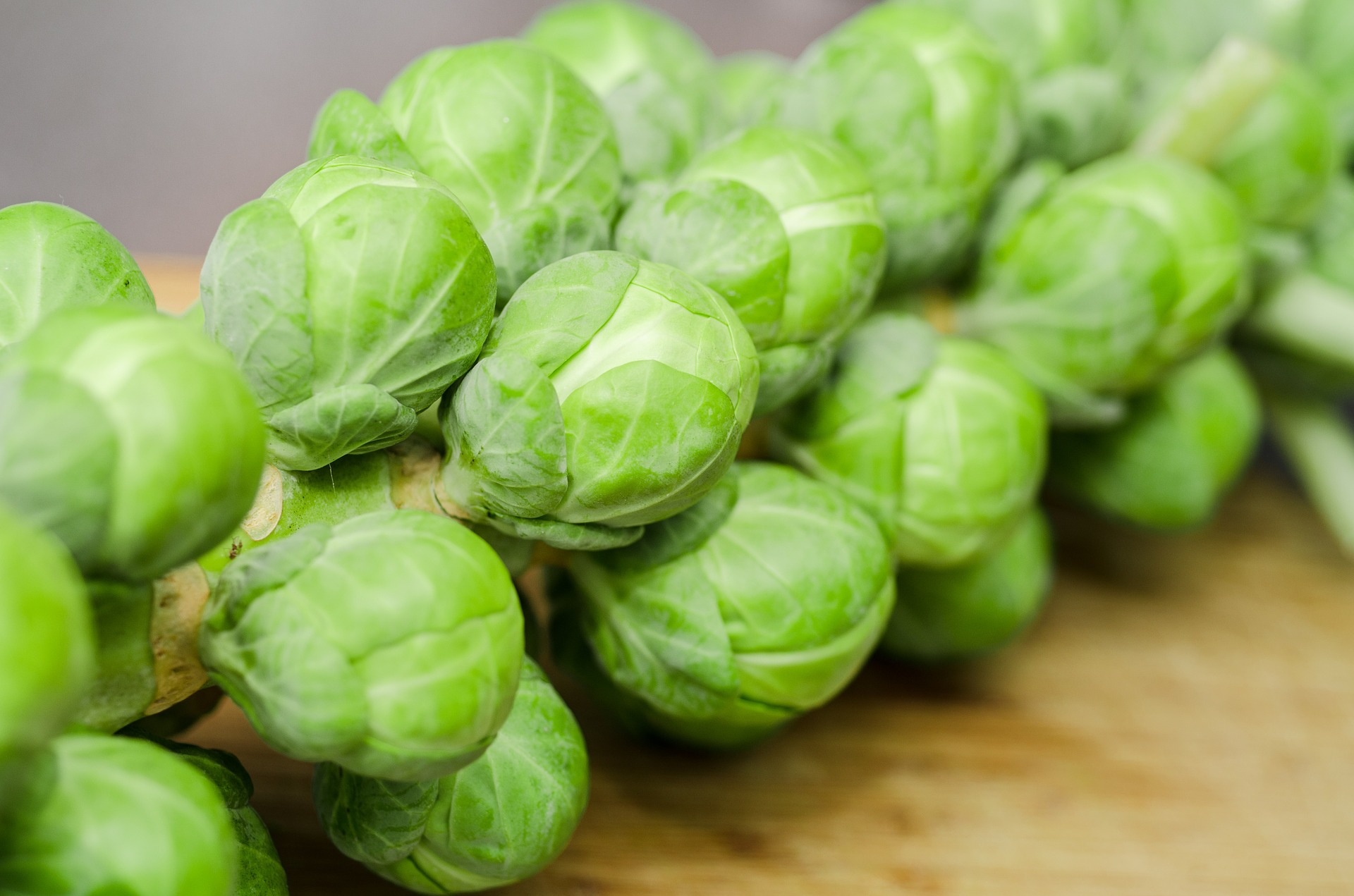 sprouts-1091633_1920