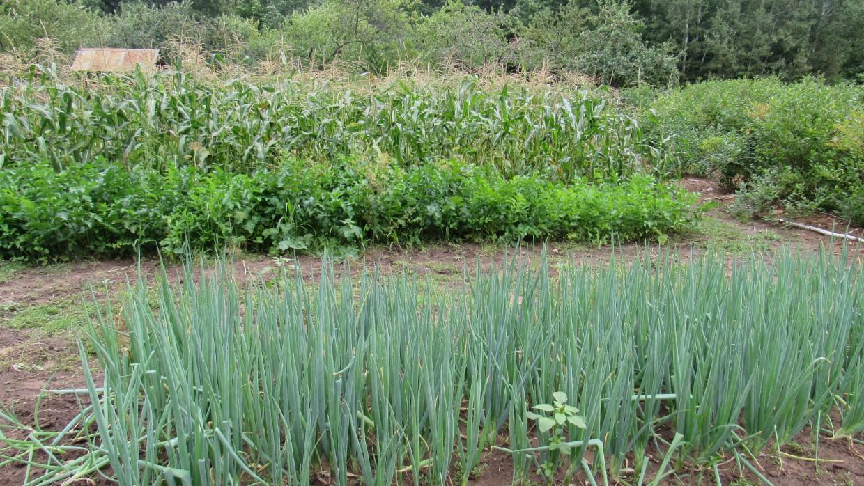 Local Flavor: North Wind Organic Farm