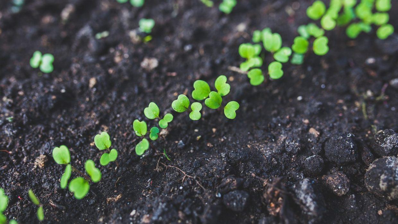 Garden Tips: Plan, Sow, Grow